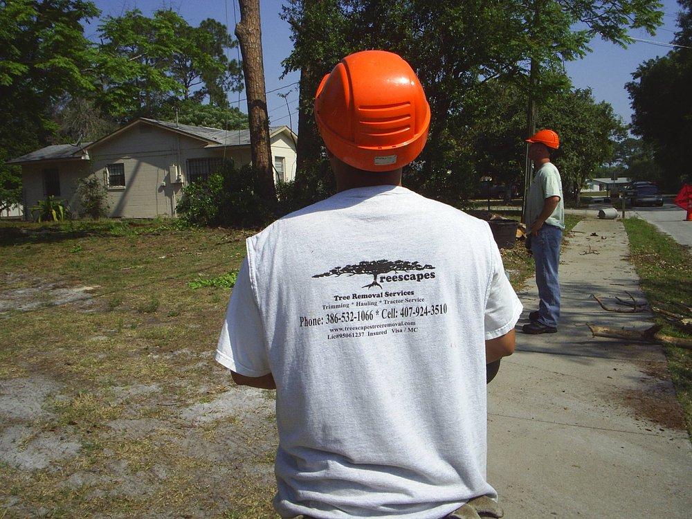 Treescape Tree Removal Service: Lake Helen, FL