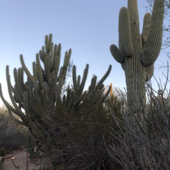 Desert Botanical Garden   3329 Photos U0026 838 Reviews   Botanical Gardens    1201 N Galvin Pkwy, Phoenix, AZ   Phone Number   Yelp