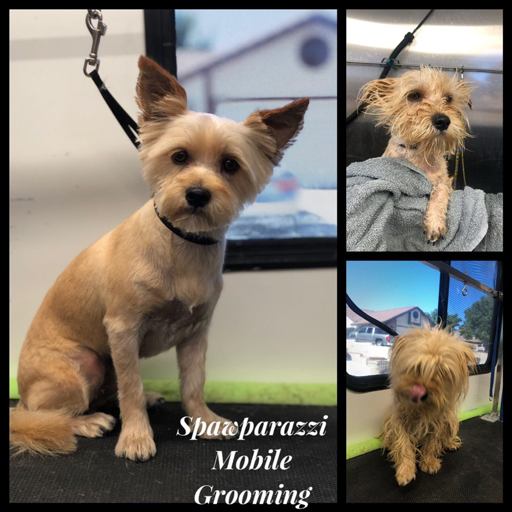Spawparazzi Mobile Grooming: Victorville, CA