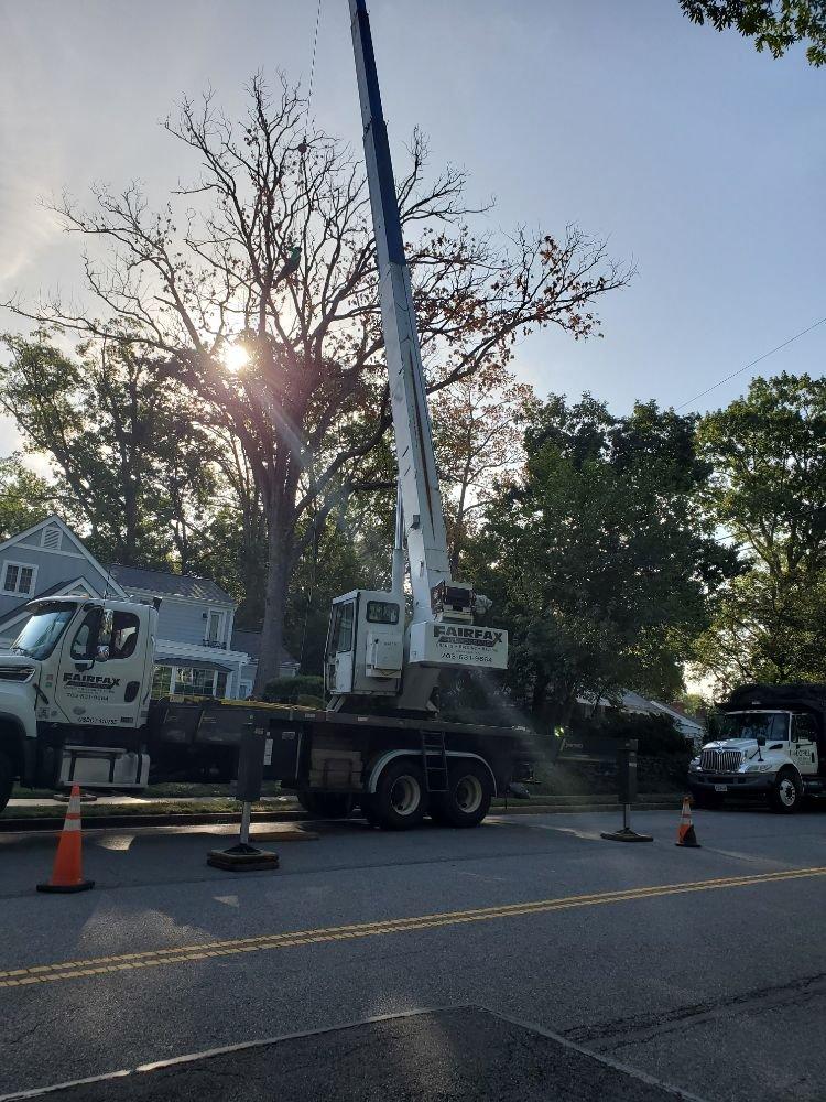 Lopez Tree Services