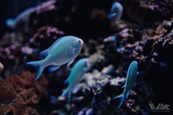 Ocean Rich Supply Aquariums North Valley San Jose Ca