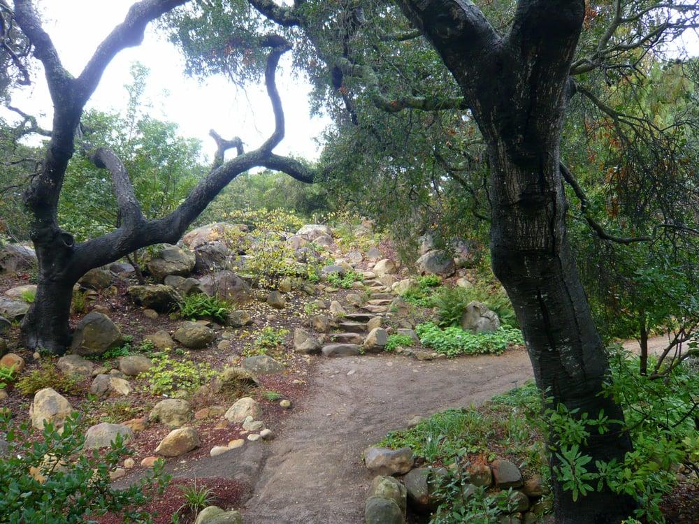 Coast Live Oaks Along The Walking Trail Yelp