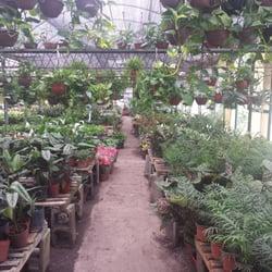 Vivero la facultad viveros y jardiner a av chorroar n for Vivero agronomia