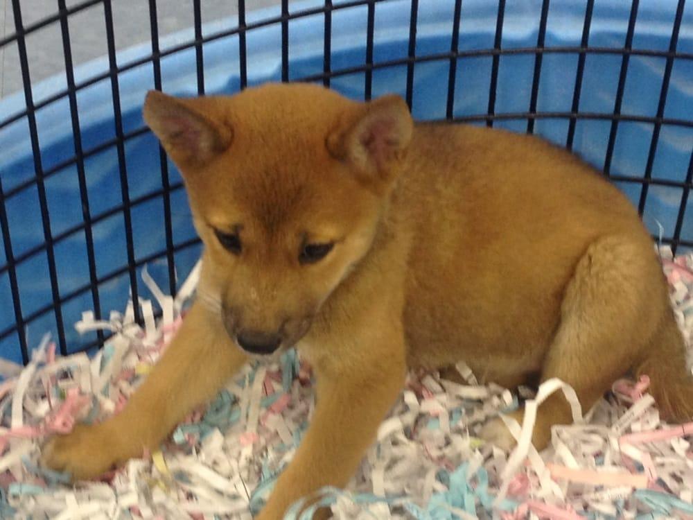Puppies Galore & More - 29 Photos & 19 Reviews - Pet Stores