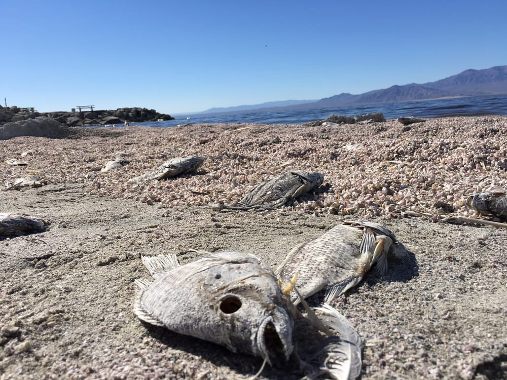 So many dead fish here so sad still looks beautiful out for Salton sea fishing report