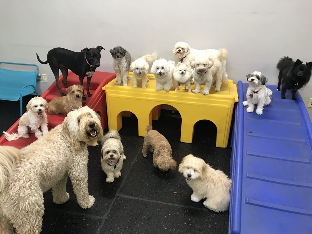 TooToo Dog Care: 1780 E Washington Blvd, Pasadena, CA