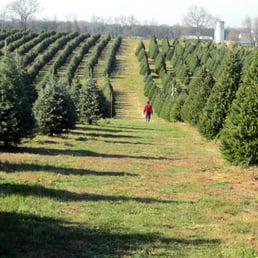 photo of moose apple christmas tree farm berryville va united states