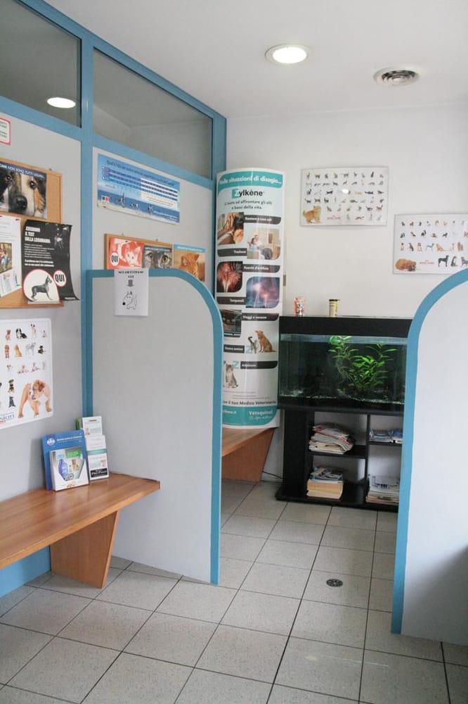 La Sala D Attesa.La Nostra Sala D Attesa Cat Dog Friendly Yelp