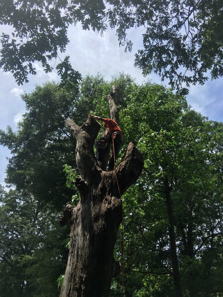 Brad The Treeman