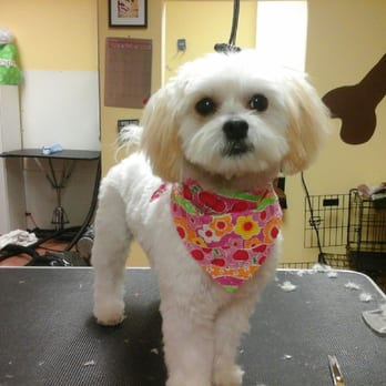 Best Dog Groomers Chicago
