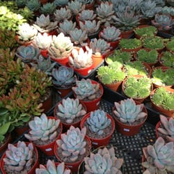 Photo Of Botanica Garden Center   Brooklyn, NY, United States. Succulent  Succulents!