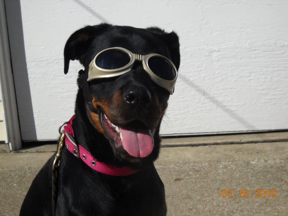 Basics & Beyond Dog Academy: 714 Pearl Rd, Brunswick, OH