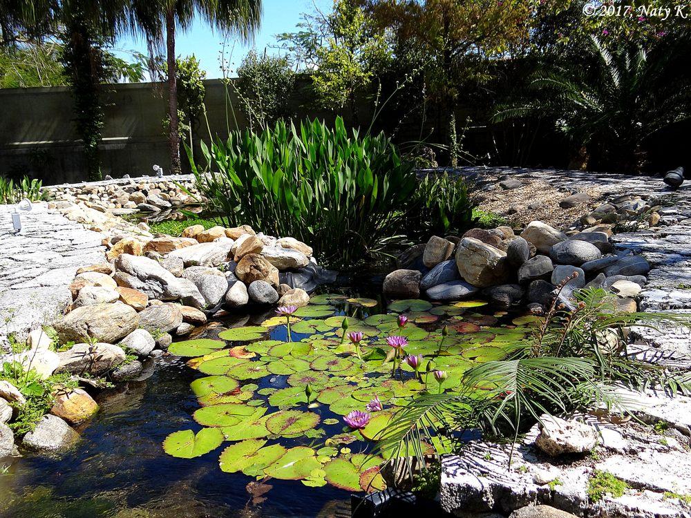 Ichimura Miami Japanese Garden 48 Photos Botanical Gardens 1101 Macarthur Cswy Omni