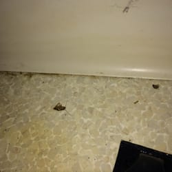 Photo Of Thomas Jefferson Apartments   Boulder, CO, United States. Roaches  Everywhere