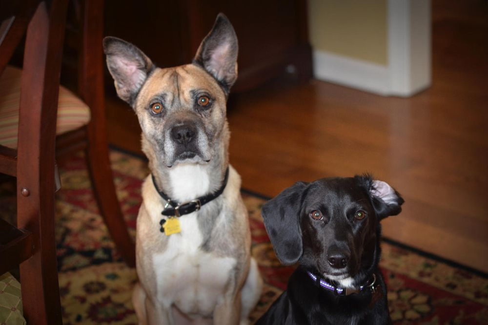 Creature Comforts Pet Sitting & Services: Moline, IL