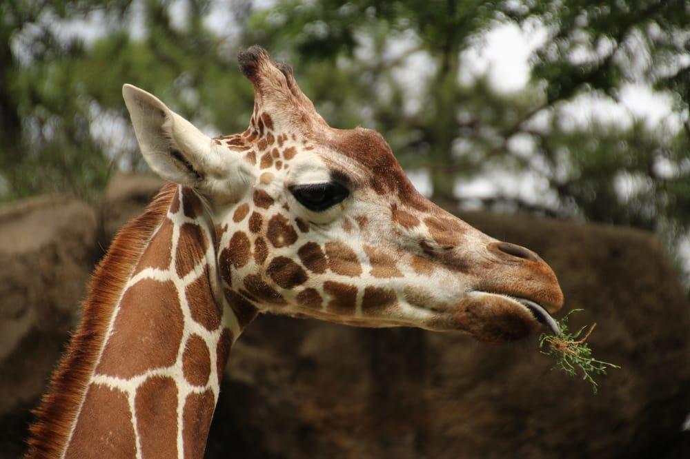 Philadelphia Zoo: 3400 W Girard Ave, Philadelphia, PA