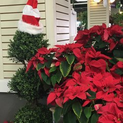 Photo Of Summerwinds Nursery Cupertino Ca United States Poinsettias