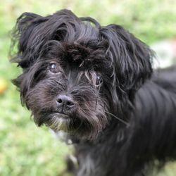 Top 10 Best Mobile Pet Grooming in Downey, CA - Last Updated August