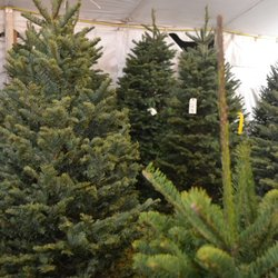 Christmas Tree Farm Arizona.Valley View Christmas Tree Farms 13 Photos Christmas
