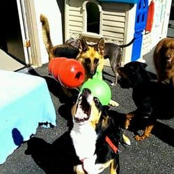 Bark avenue pet house 64 photos 18 reviews pet training 32 photo of bark avenue pet house milford ct united states solutioingenieria Image collections
