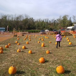 Photo Of Countryview Farm Nursery Monroe Township Nj United States Their Pumpkin