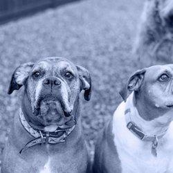 Superior Canine Training Request A Quote Pet Training 2931