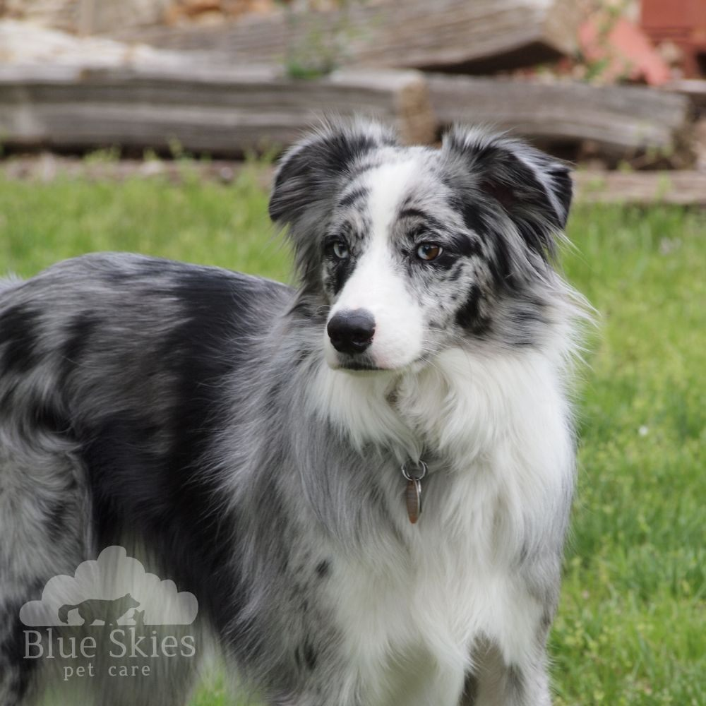 Blue Skies Pet Care: N Ash St, Newton, KS