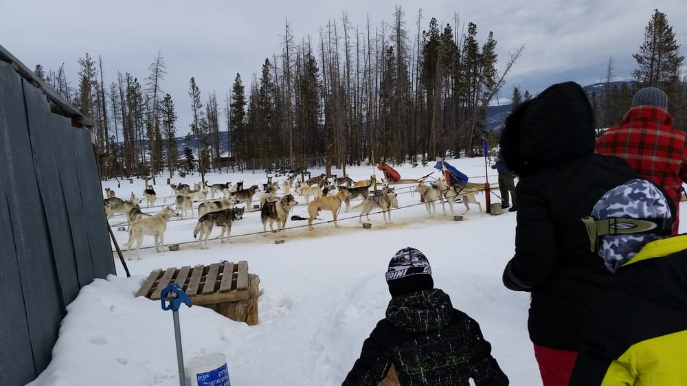 Photos for Dog Sled Rides of Winter Park - Yelp