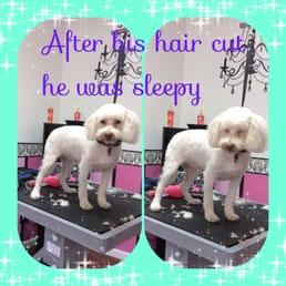 Photos for posh paws pet salon yelp for 4 paws pet salon