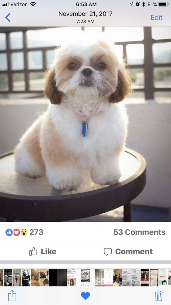 Best Friends Doggie Day Spa: 531 Eastern Blvd, Watertown, NY