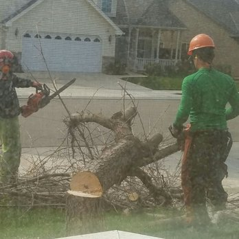 Photo Of Clovis Tree Service Ca United States Me King Out