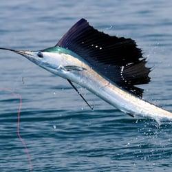 Boneshaker charters boating 3585 se saint lucie blvd for Fishing charters stuart fl