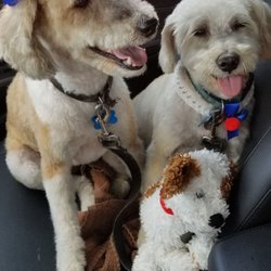 dog grooming chicago