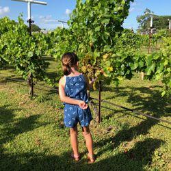 the best 10 wineries in galveston tx last updated december 2018