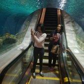 OdySea Aquarium   1064 Photos U0026 496 Reviews   Aquariums   9500 E Via De  Ventura, Scottsdale, AZ   Phone Number   Yelp