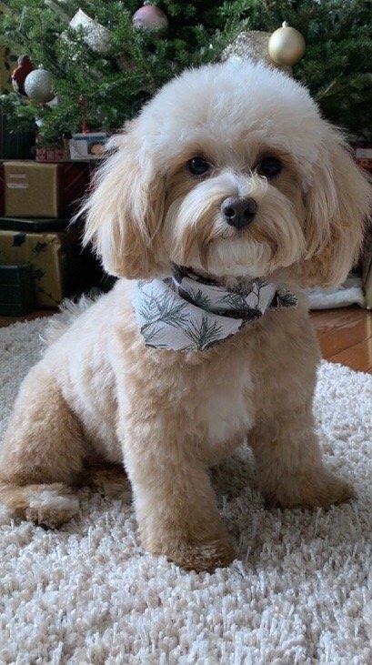 Hair of the Dog Grooming Salon: 139 E Butler Ave, Ambler, PA