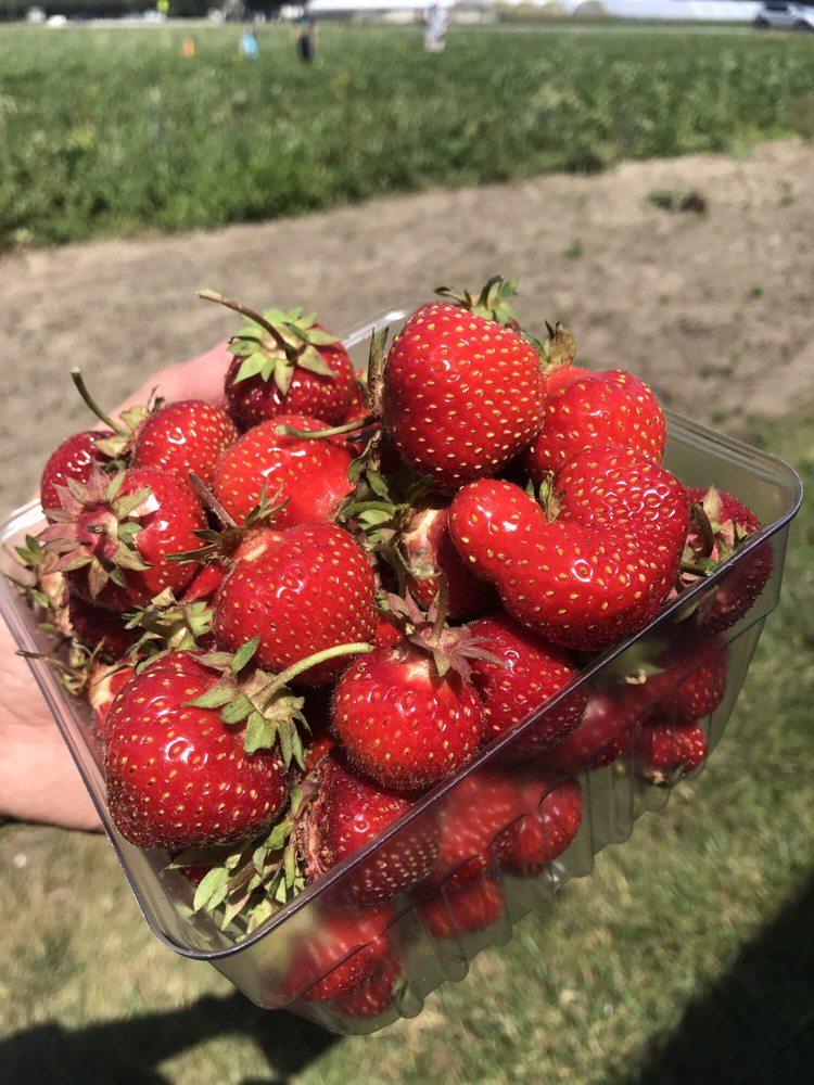 Creque's Greenhouse: 9700 Sylvania Ave, Sylvania, OH