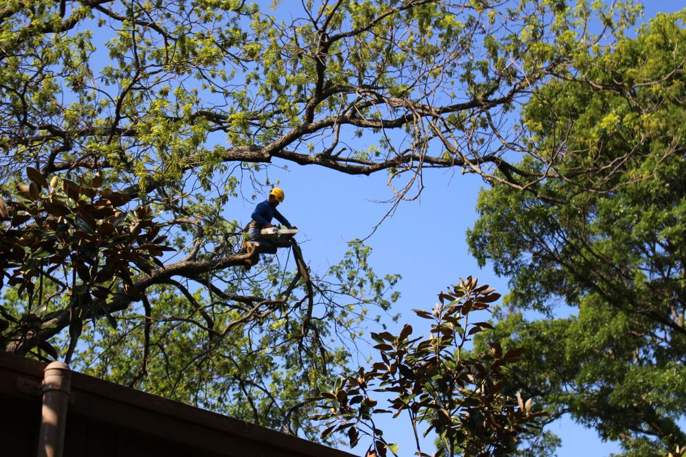 Dallas Tree Surgeons