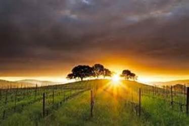 Skyline Wine Tours: Napa, CA