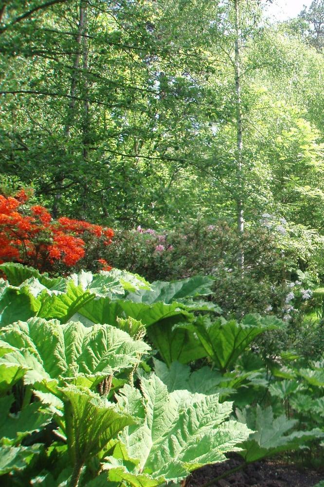 forstbotanischer garten eberswalde 29 fotos botanischer garten am zainhammer 5 eberswalde. Black Bedroom Furniture Sets. Home Design Ideas