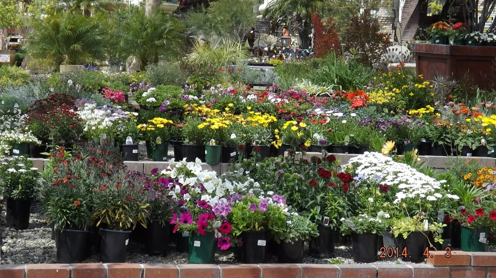 Plenty Of Annuals Perennials To Select From Yelp