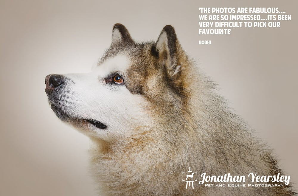Jonathan Yearsley Pet And Equine Photography | Mold Road, Caergwrle LL12 9HA | +44 7836 756002