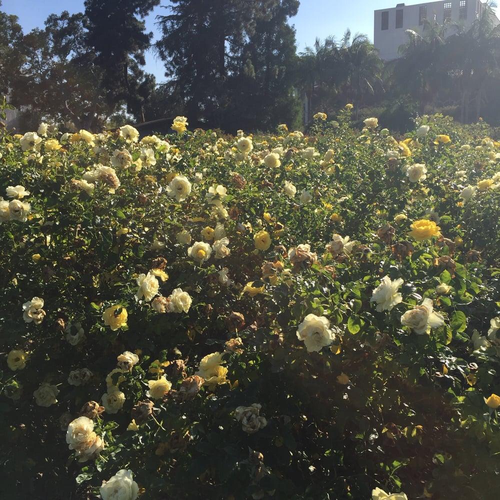 Photos for Exposition Park Rose Garden - Yelp