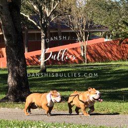 DanShi's Bullies - 604 Photos - Pet Breeders - 3280 NW 96th Way