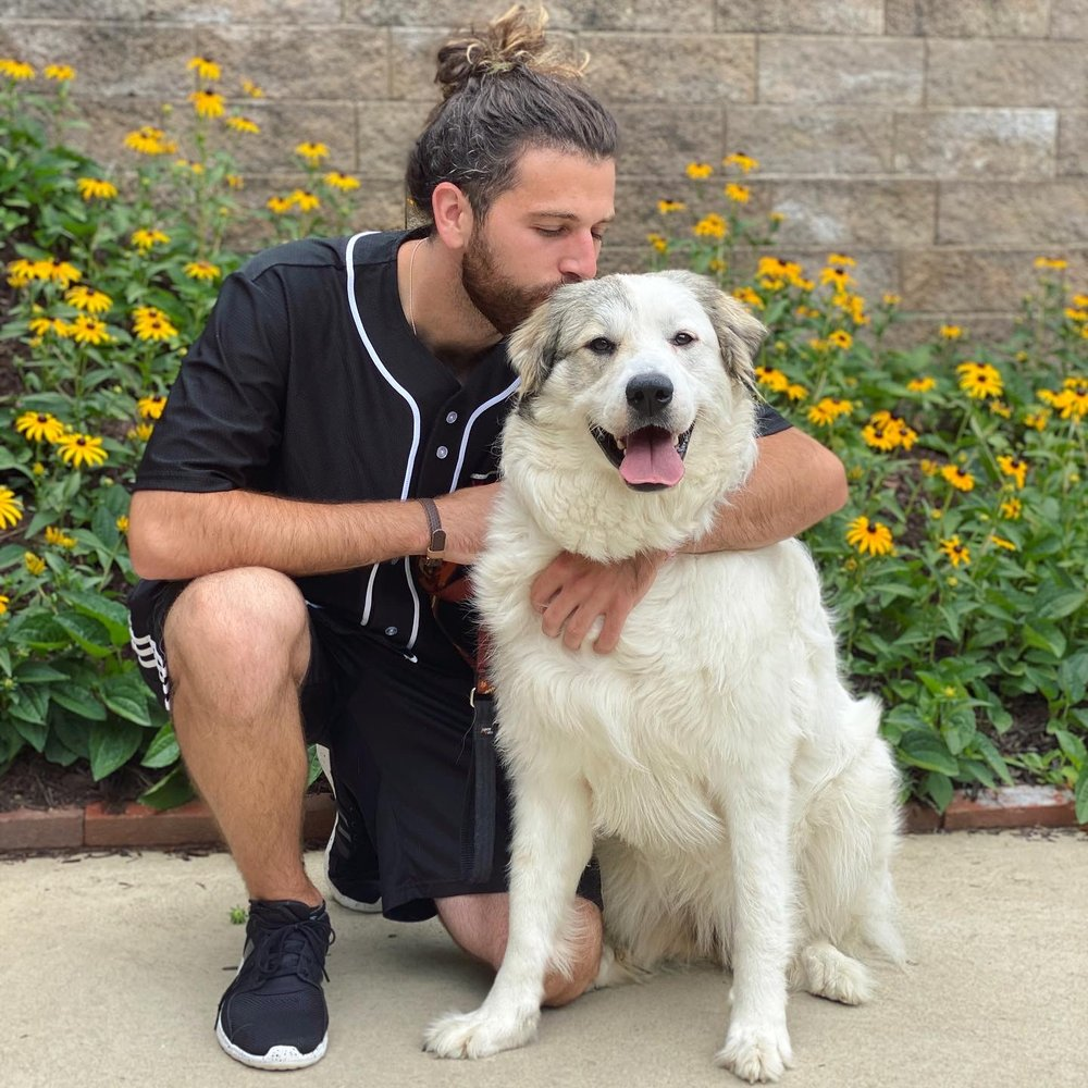 Say It Once Dog Training: 133 Ridge View Dr, New Kensington, PA