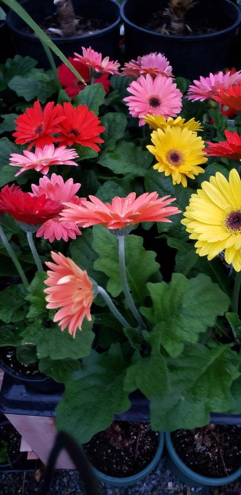 Buck Run Nursery & Landscaping: 3660 Stoney Batter Rd, Mercersburg, PA