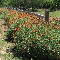 Photo Of Gill Landscape Nursery Corpus Christi Tx United States Beautiful Wildflower