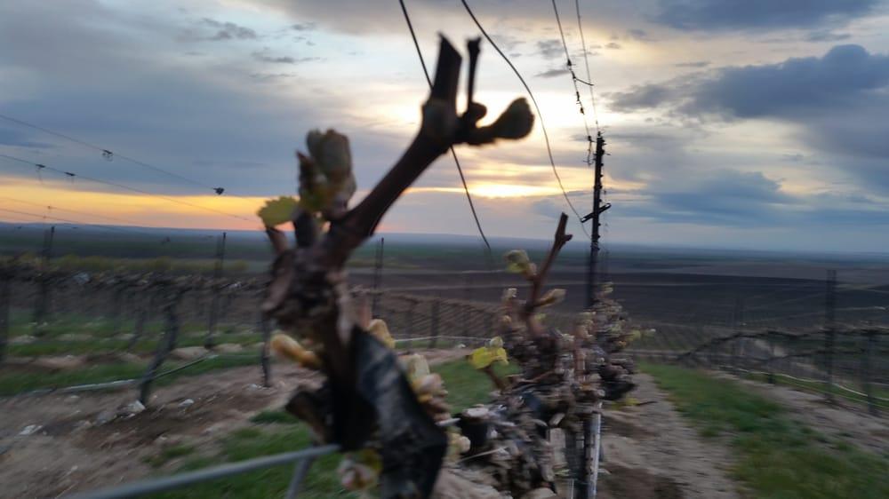 Northwest Mountain Winery