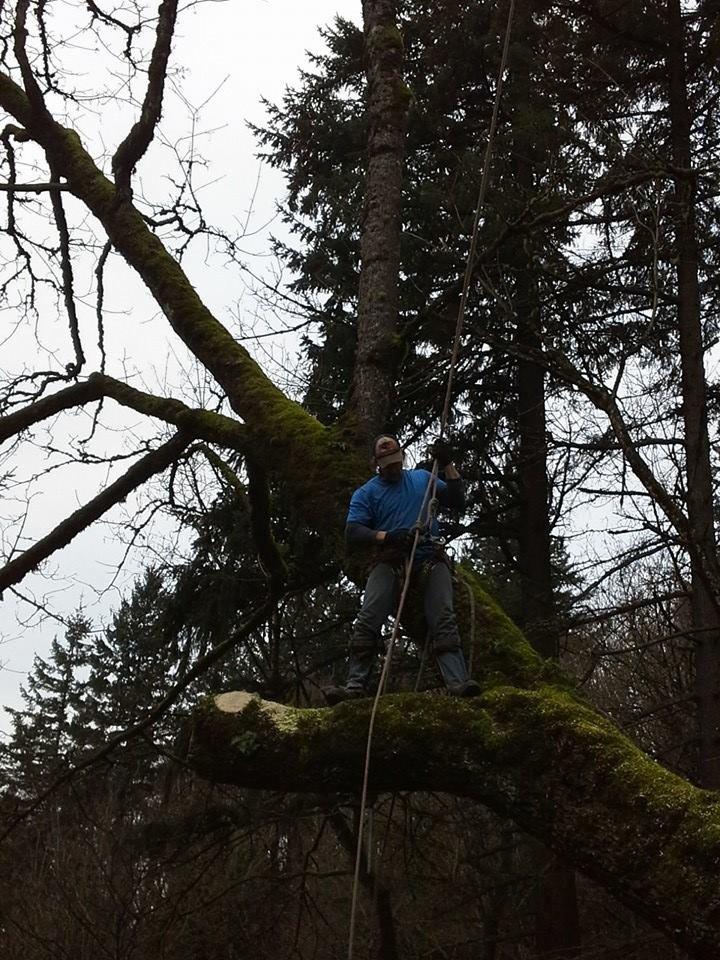 Columbia Climbers Tree Service: 1103 NE 310th Ave, Washougal, WA