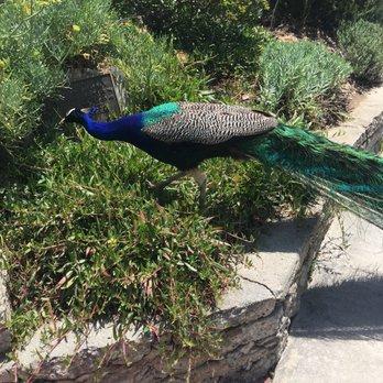 Los Angeles County Arboretum and Botanic Garden - 4637 Photos & 708 ...